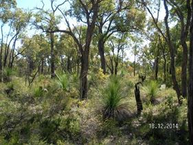 Lot 569 Willaring Way, Chittering