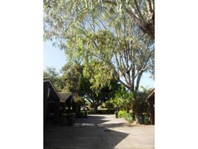 11/52 Samson Street, White Gum Valley