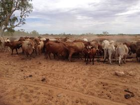 Pastoral Lease Cobra Dairy Creek Road, Gascoyne Junction