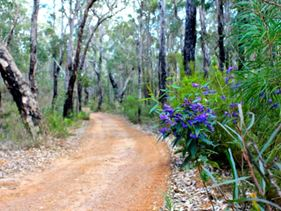 Lot 22 Bussell Highway, Forest Grove