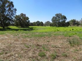 Lot 211, 54 Honeymyrtle Loop, Forrestdale
